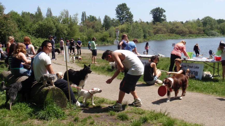 Dog off leash area, Trout Lake