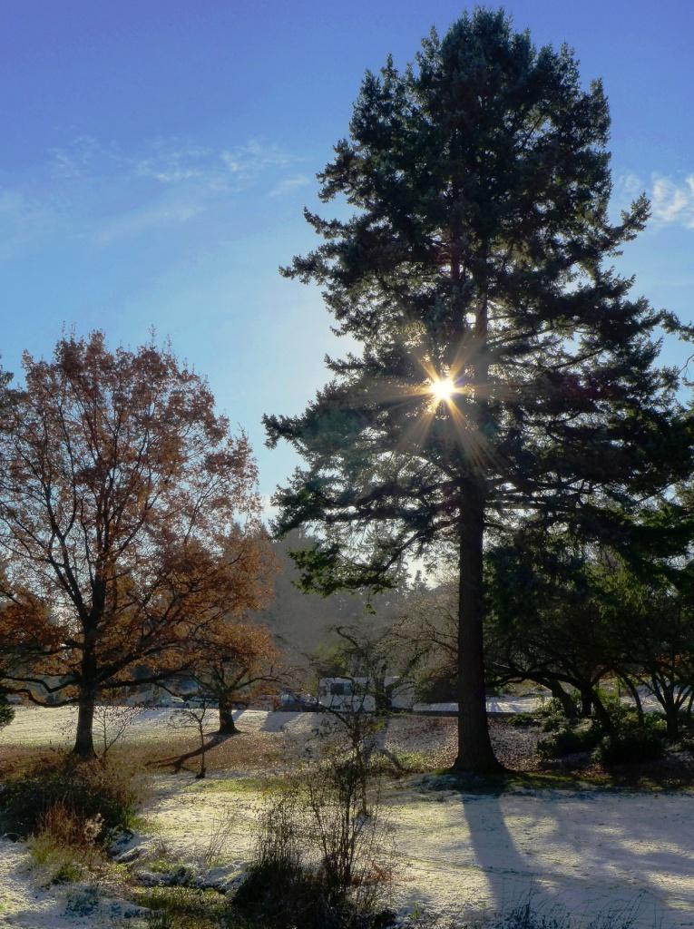 QEP Arboretum P1110668c
