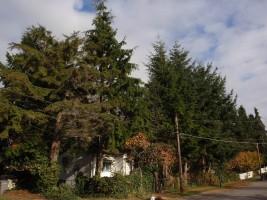 Cedar Cottage 18th