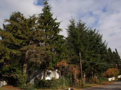 Cedar Cottage East 18th Avenue