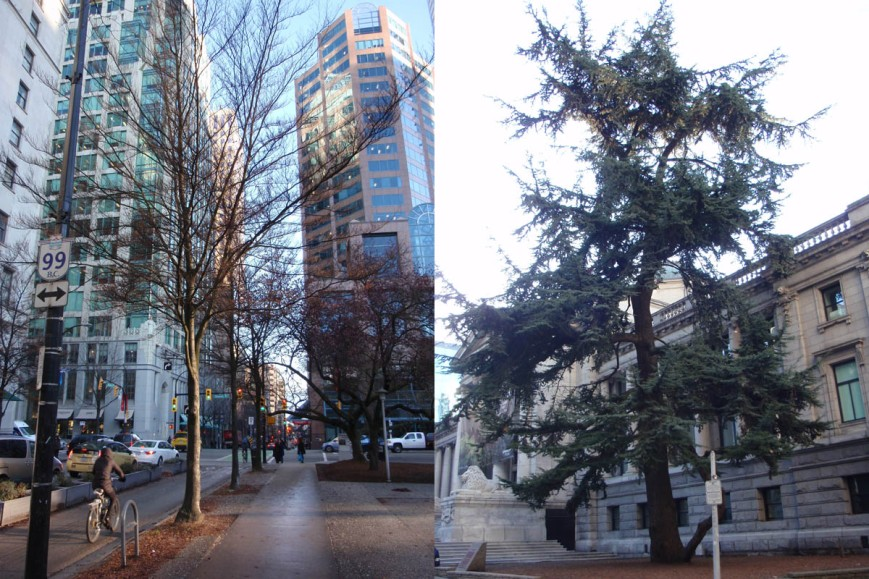 trees in VAG North Plaza