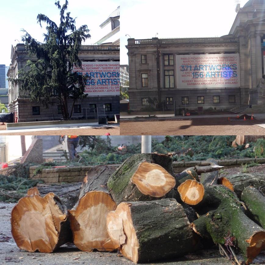 Art gallery trees cut